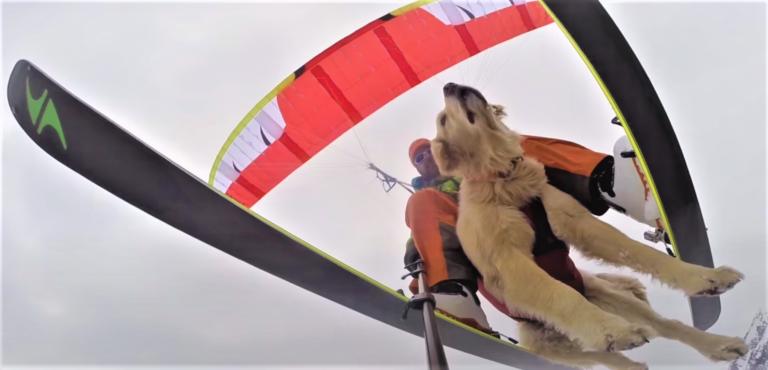 Top 10 des vidéos d'animaux qui pratiquent du sport à sensations !